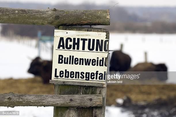 DEU DEUTSCHLAND Brandenburg Gerswalde Bisonzucht in der Uckermar Schild mit Aufschrift Achtung Bullenweide