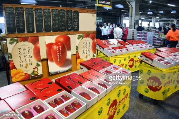 """Brand-name mangoes, """"Taiyo no Tamago"""" , are lined up at a wholesale market in Miyazaki, southwestern Japan, for the season's first auction on April..."""