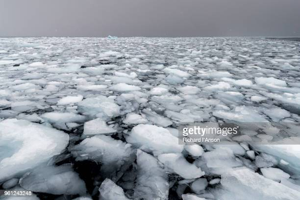 brash ice during snowstorm in bransfield strait - ijsschots stockfoto's en -beelden