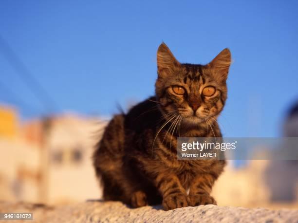 Braune Hauskatze liegt auf einer Mauer
