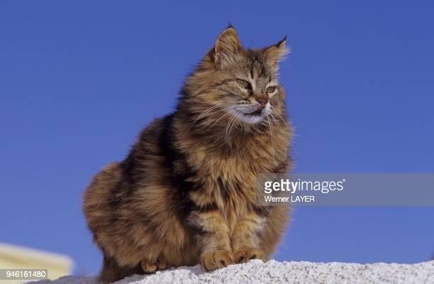 Braune Hauskatze sitzt auf einer Mauer