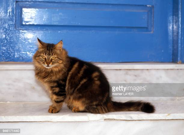 Braune Hauskatze steht auf einer Marmortreppe vor einer blauen Tr