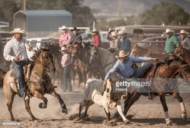 a brave cowboy participating in the steer wrestling rodeo event. - bull stock pictures, royalty-free photos & images
