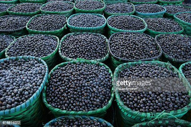 brazil - acai fruits in amazon - acai stock pictures, royalty-free photos & images