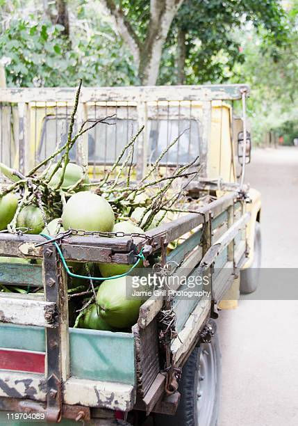 Brazil, Bahia, Trancoso, Fresh coconuts on back of pick-up truck