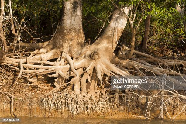 Brazil Mato Grosso Pantanal area river Cuiaba