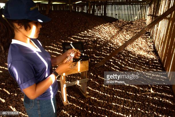 Brazil nut for export technician manages Brazil nut´s humidity levels for international standard quality Amazon rainforest Chico Mendes Extractive...