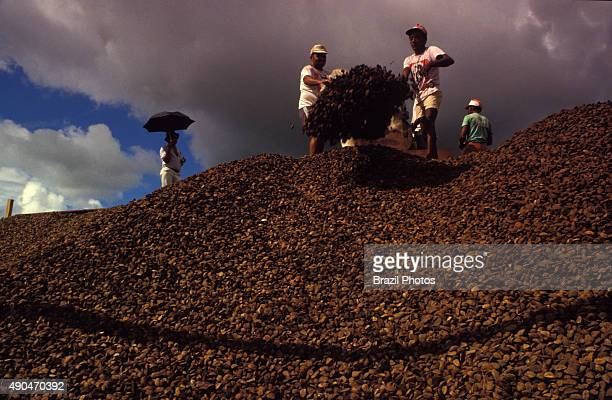 Brazil nut fruits loading for exportation at Rio Branco city harbor Acre State Brazil use of natural resources as income generator for low income...