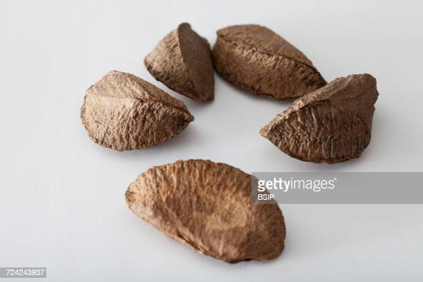 brazil nut - brazil nut stock photos and pictures