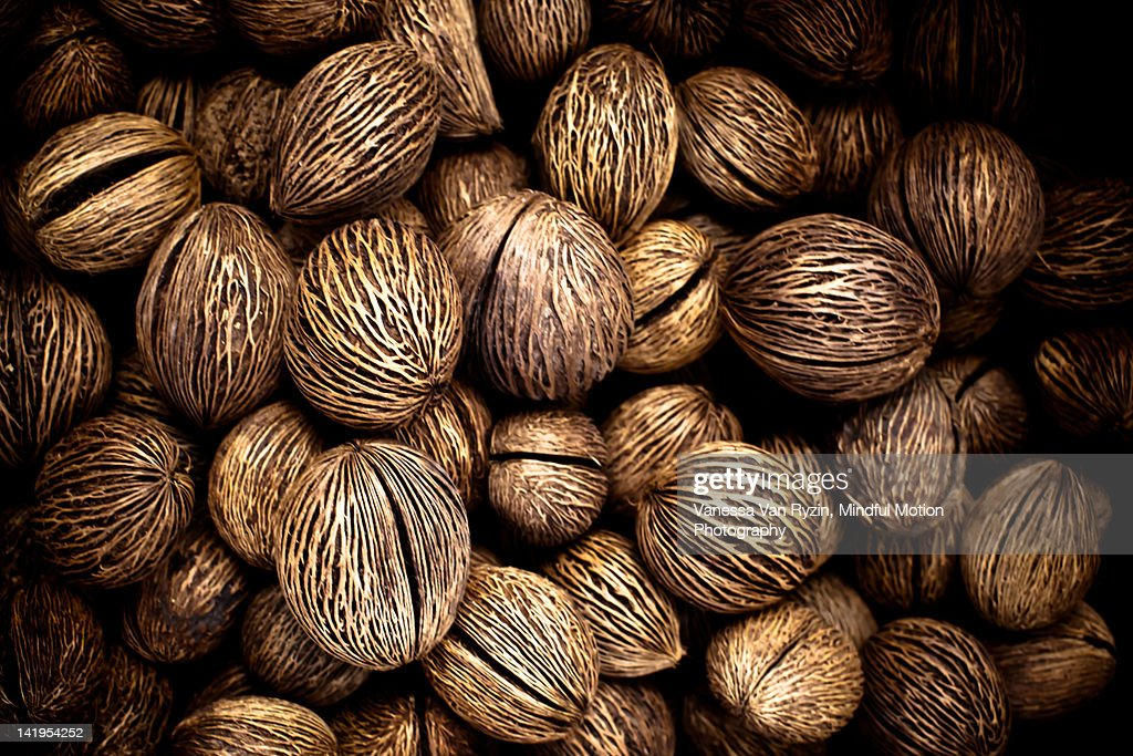Brazil nuts : Stock Photo