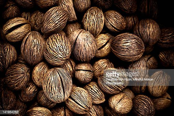 brazil nuts - vanessa van ryzin foto e immagini stock