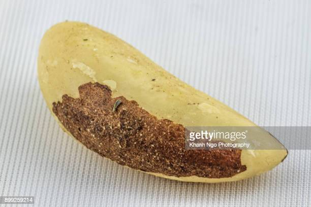 brazil nuts - brazil nut stock photos and pictures