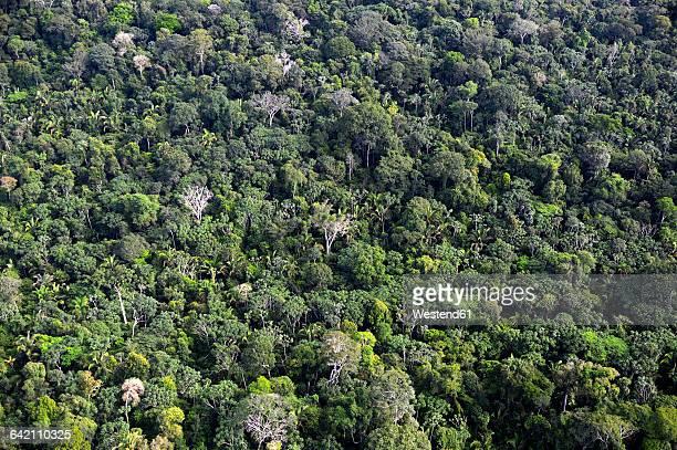 Brazil, Para, Amazon rainforest, aerial view