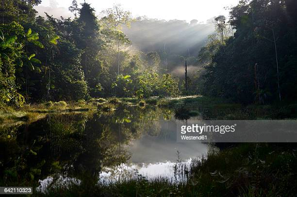 Brazil, Para, Amazon rainforest, pond in the morning