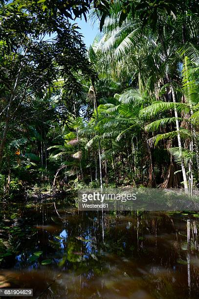 Brazil, Para, Trairao, Amazon rainforest, pond