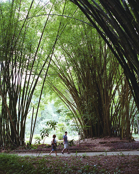 Brazil, Rio de Janairo, Botanical Gardens, giant bamboo forest