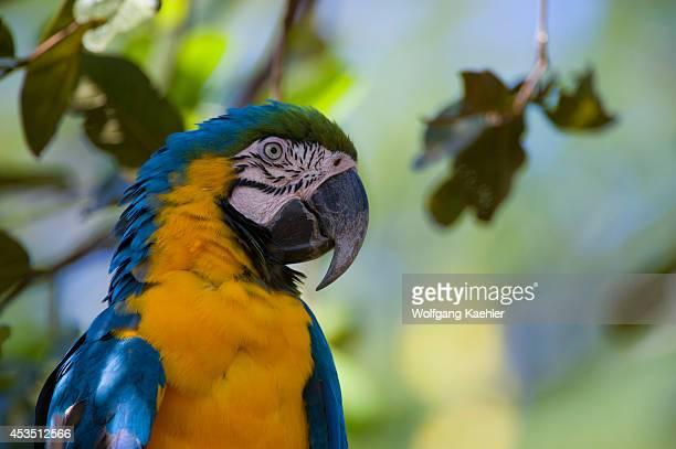 Brazil Southern Pantanal San Francisco Ranch Blue And Yellow Macaw