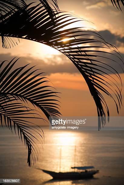 brazil sunset silhouette