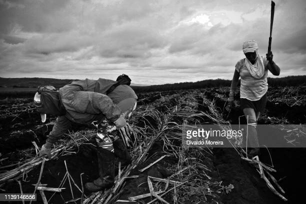 brazil - workers - agriculture - sugar cane - divaldo moreira stock photos and pictures
