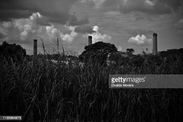 brazil - workers - ceramics - production of clay bricks - divaldo moreira stock photos and pictures