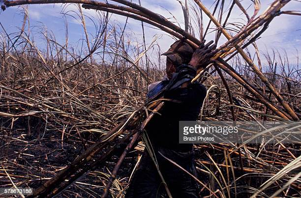 Brazilian acculturated Indian works as sugarcane cutter Mato Grosso do Sul State Midwest Brazil