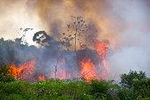 Brazilian Amazon Burning
