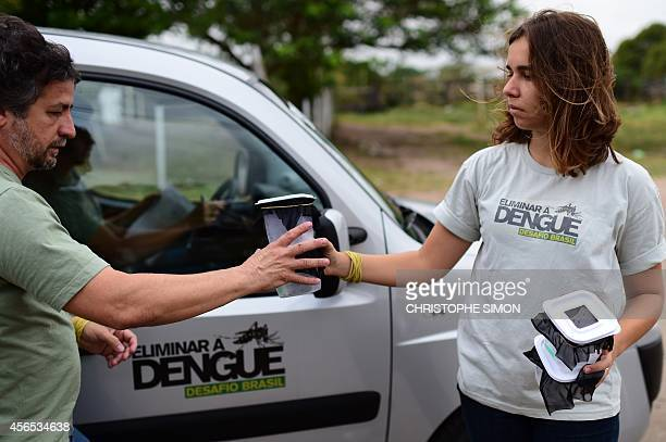 Brazilian biologists Roberto Costa Peres and Mariane da Rocha Davi get ready to release 10000 Aedes aegypti mosquitoes infected with the Wolbachia...