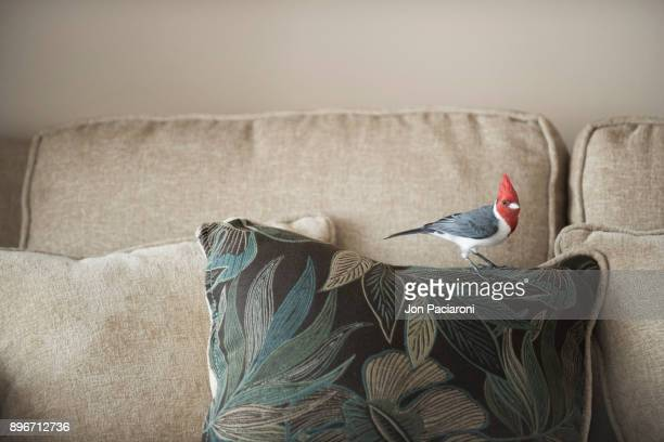 A Brazilian Cardinal Sitting on a Couch Pillow with Leaf Print