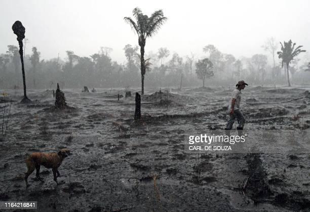 Brazilian farmer Helio Lombardo Do Santos and a dog walk through a burnt area of the Amazon rainforest near Porto Velho Rondonia state Brazil on...