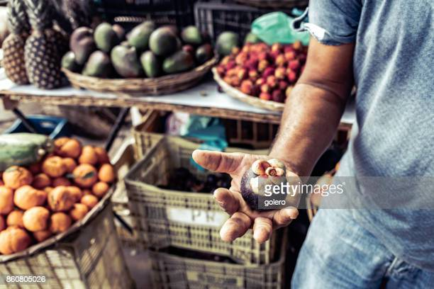 brazilian farmer holding mangosteen fruit in his hand - south america stock photos and pictures