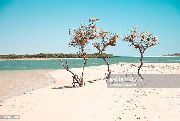 Brazilian natural landscape