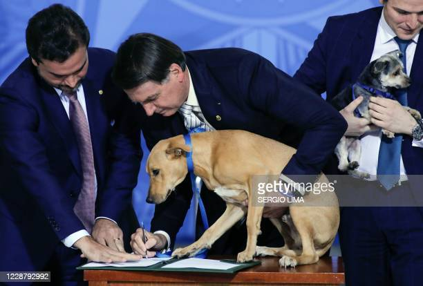 Brazilian President Jair Bolsonaro holds his family dog Nestor during the sanction of a law increasing punishments for abuse of domestic animals, at...