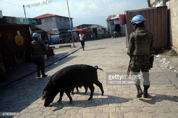 A Brazilian soldier of the MINUSTAH peacekeeping contingent walks past a pig while patrolling in the Cite Soleil slum of PortauPrince on March 11...