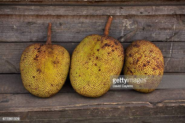 breadfruit - ranomafana national park stock photos and pictures