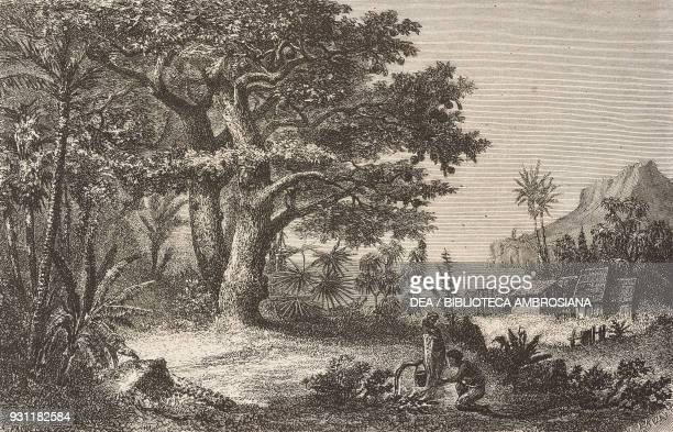 Breadfruit tree drawing from The Malay Archipelago 18611862 by Alfred Russell Wallace from Il Giro del mondo Journal of geography travel and costumes...
