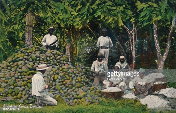 Breaking Cocoa Trinidad' early 20th century Workers processing cocoa beans Cacao or cocoa has contributed to the socioeconomic development of...