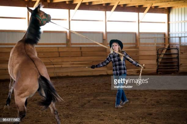 brechen in ein junge quarter horse - female whipping stock-fotos und bilder