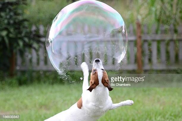 Breaking The Bubble