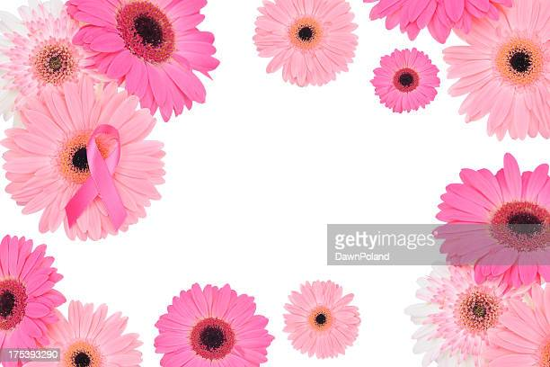 breast cancer awareness frame - gerbera stock pictures, royalty-free photos & images