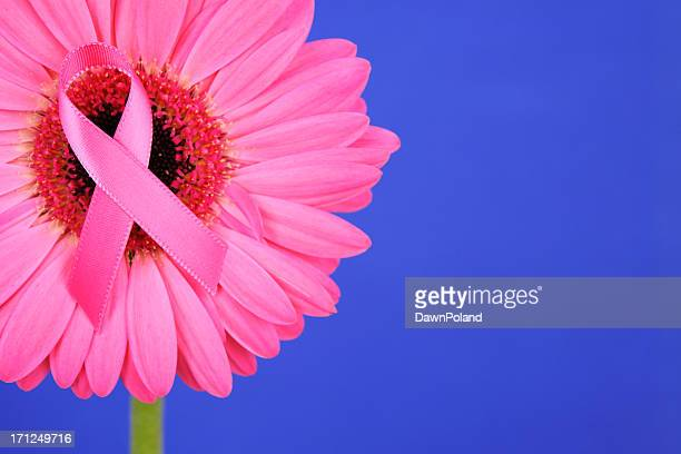 breast cancer awareness - blue cancer ribbon stock photos and pictures