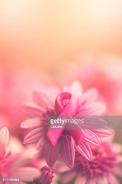 breast cancer awareness ribbon on pink flowers with soft background - conscientização do câncer de mama - fotografias e filmes do acervo