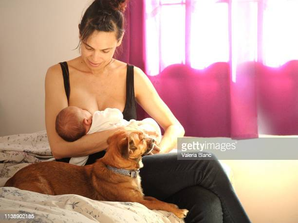 breastfeeding mother - woman breastfeeding animals stock photos and pictures