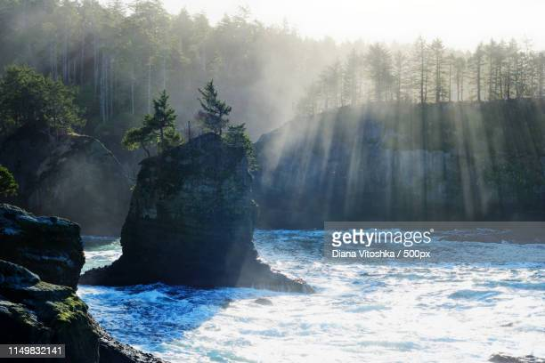 breathing - cape flattery stock photos and pictures