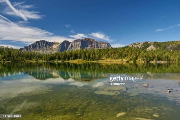 scènes à couper le souffle de la région sunshine village du parc national banff, alberta, canada - ours brun photos et images de collection