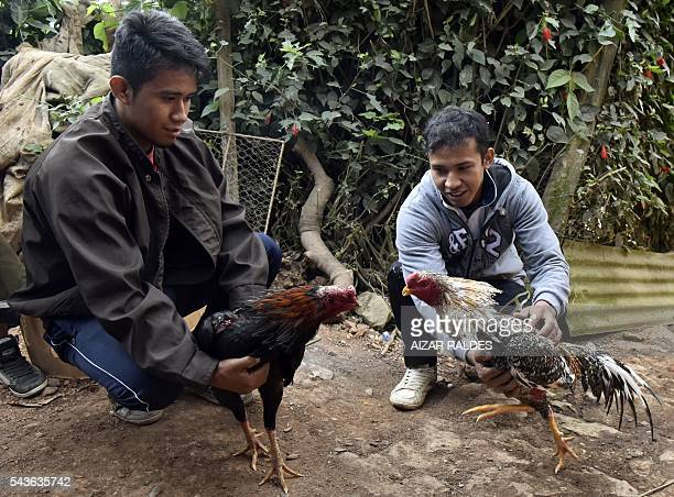 Breeders await with their gamecocks during a cockfight tournament in Coroico Los Yungas Bolivia on June 25 2016 Cockfighting is traditional in rural...