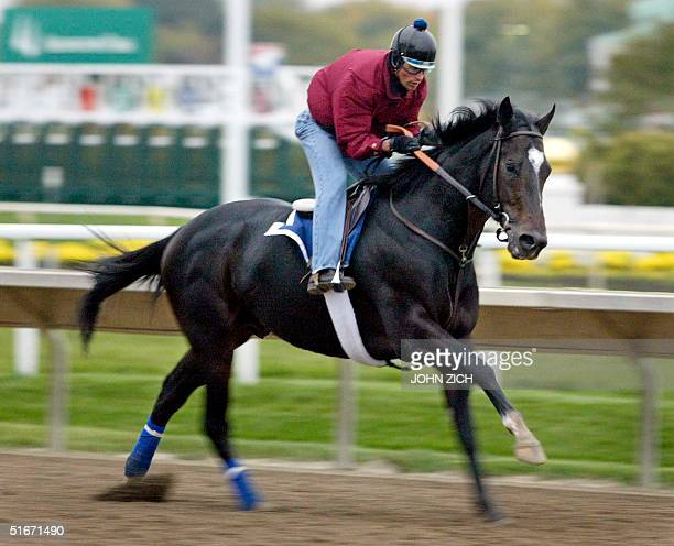 Breeders' Cup favorite Medaglia d'Oro goes through early morning workouts for the Breeders' Cup Classic 23 October 2002 at Arlington Park in...