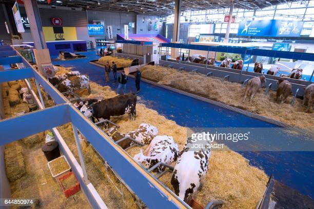 Breeders stand next to cows at the Salon de l'Agriculture on February 24 in Paris Nearly 4000 livestocks will be present at porte de Versailles...