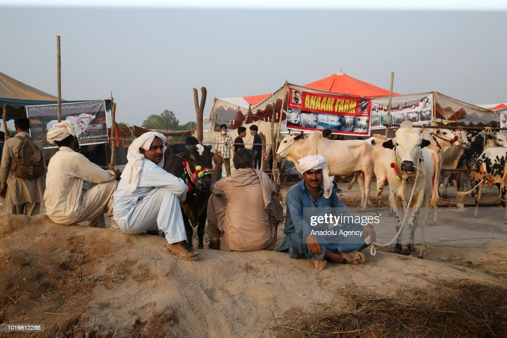 Breeders wait with the sacrificial animals at a livestock