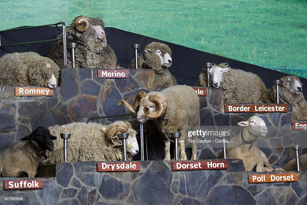 Breeds of sheep on display during the sheep show at Agrodome