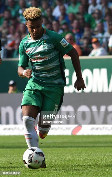 Bremen's Serge Gnabry in action during the German Bundesliga soccer match between Werder Bremen and FC Augsburg in the Weserstadion in Bremen Germany...